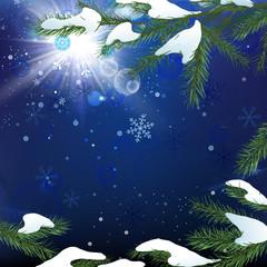 02_Christmas tree branch snow