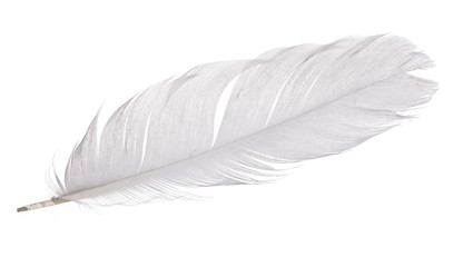 single gray goose quill on white