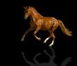 Chestnut horse.