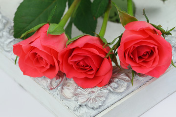 Pink roses on white vintage tray