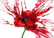 poppy flower - 55217543