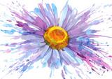 Fototapety daisy flower