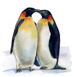 couple of penguins