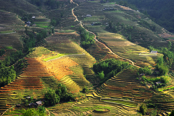 Sapa's rice fields