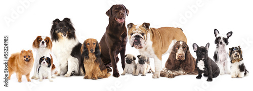 Foto op Plexiglas Papegaai Group of dogs sitting in front of a white background