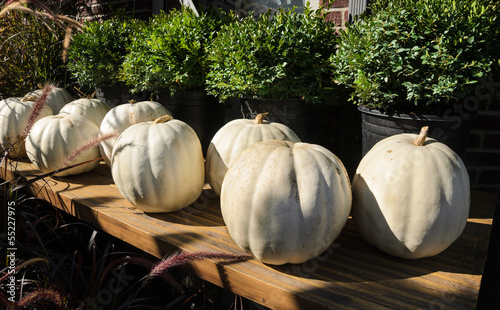 White Pumpkins on display