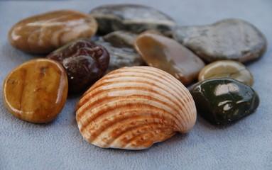Muscheln und Steine - Erinnerungen ans Meer