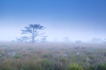 trees in dense morning fog