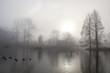 tree silhouette, bridge and lake in fog