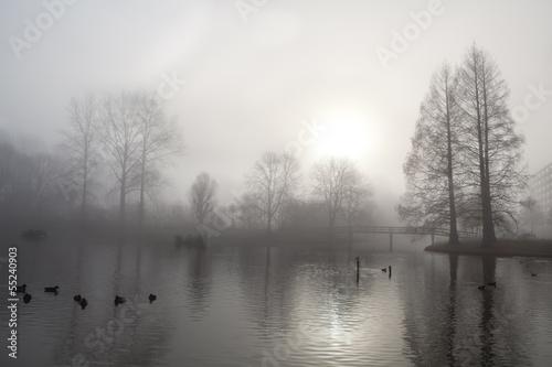 Fototapeten,nebel,nebel,frühe,morgens