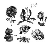 Collection of vintage hand drawn flowers