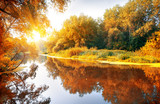 Fototapety River in a delightful autumn forest