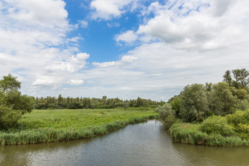 "Swamp of the National Park ""De Biesbosch"" in the Netherlands"