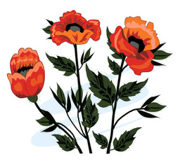 Beautiful bouquet of poppies