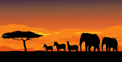African safari & Sunset