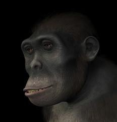 Homo Habilis Portrait