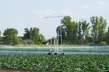 irrigation pivot watering on vegetable field
