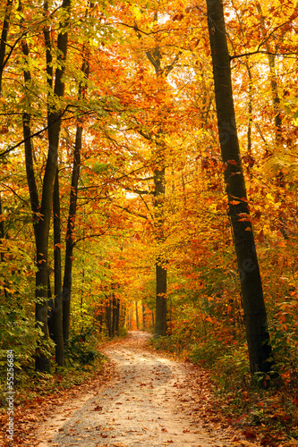Wall mural autumn forest photo wallpaper for Autumn forest wallpaper mural