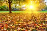 Fototapety Sunny autumn foliage