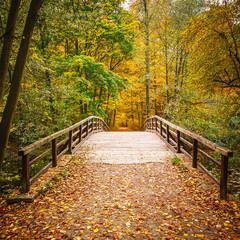 fototapeta most w lesie jesienią