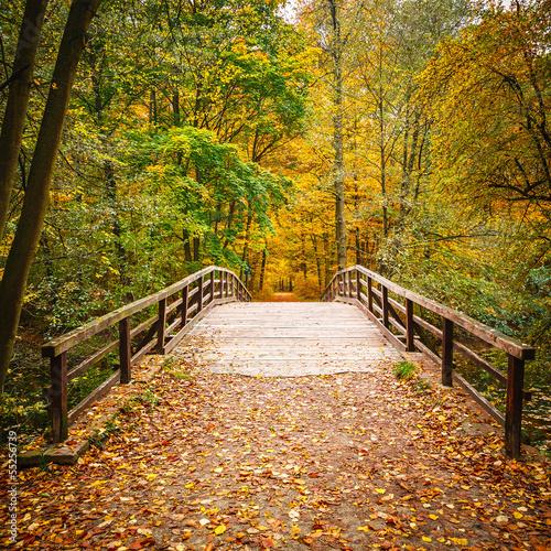 most-w-lesie-jesienia