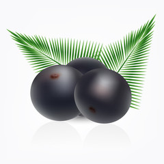Amazon acai fruit with palm leaves isolated on white background.