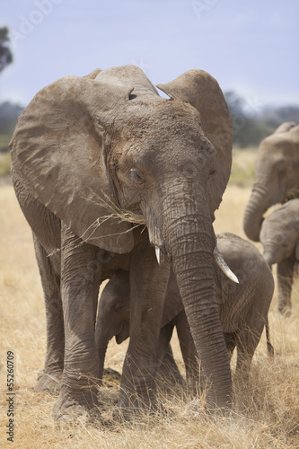 Elephant mother with cub