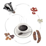 Fototapety Smoking Hot Coffee with Civet Coffee Beans