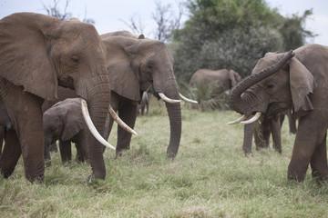 Group of elephants feeding