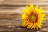 Fototapety Sunflower