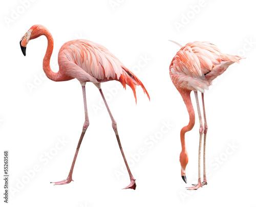 Foto op Aluminium Flamingo Two flamingo