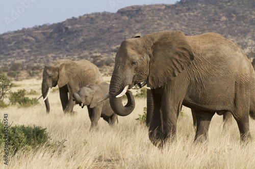 Group of elephants feeding
