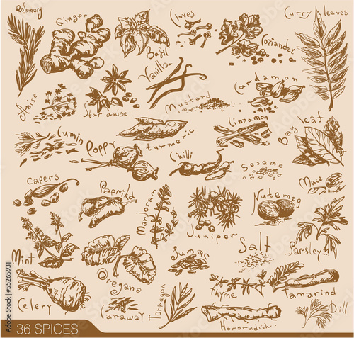 Hand drawn spices and herbs collection. Vector design