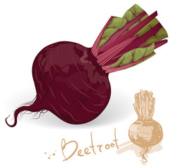 Fresh and sweet beetroot. Vector.