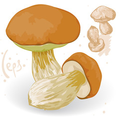 Vector ceps on a white background.