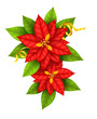 Red Christmas Star flowers poinsettia with gold ribbon