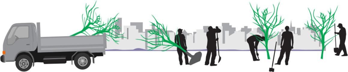 ARBRES EN PLANTATION