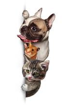 Haustier-Gruppe Anmelden Vertikale