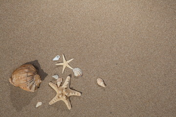 Sea shells stars with sand background