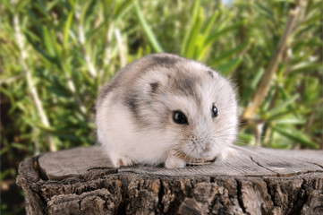 Hamster #7
