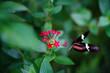 Borboleta voando na flor