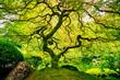 Amazing Green Tree