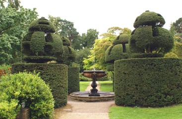 fountain and yew topiary