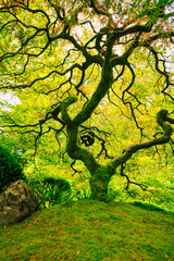 Amazing Green Tree
