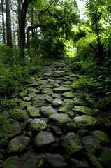 箱根の旧街道石畳