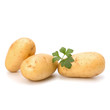 New potato and green parsley