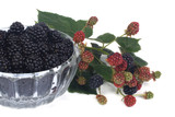 blackberries in a glass bowl and a branch with unripe berries