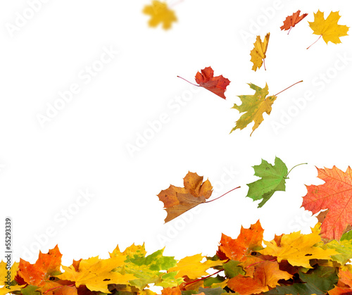 Deurstickers Bomen Isolated autumn leaves