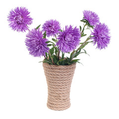 The beautiful blue aster flowers in a vase isolated on white