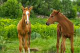 Horse Foal  in field